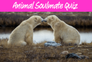 Quiz—Who's Your Animal Soulmate?