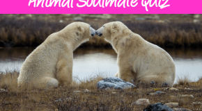 Quiz – Who's Your Animal Soulmate?