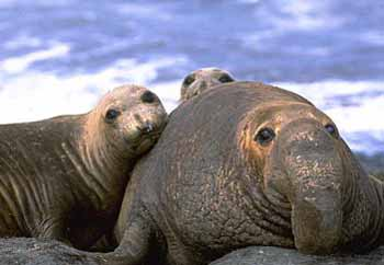 Discover elephant seals and more on California's wild central coast