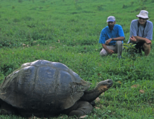 Blue-footed Boobies, Giant Tortoises, and More: The Galapagos Islands! (save $750!)