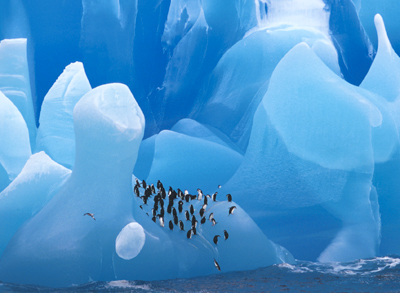 The Best of Antarctica, for the Lowest Price!
