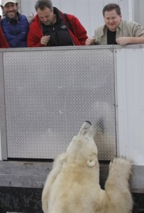 Natural Habitat Expeditions CEO Olaf Malver (above, center) takes in a close encounter with a polar bear in Churchill, Manitoba.