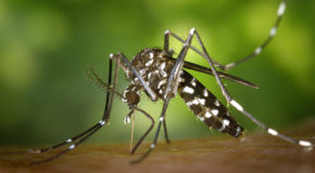 Homage to a Small Eco-Warrior: the Mosquito