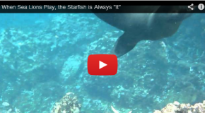 The Sea Lion and the Starfish
