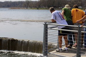 In spring, Madisonians like to watch muskies swim up to a small dam to spawn. ©John T. Andrews.