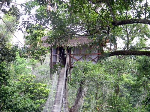 Amazon Jungle treehouse - natural habitat adventures