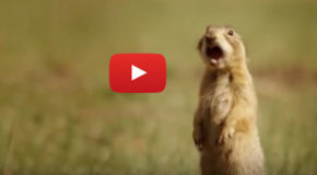 Talk of the (Prairie Dog) Town