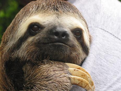 Enjoy a Slothful Sojourn in Costa Rica!
