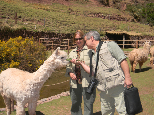 amazon and macchu pichu alpaca