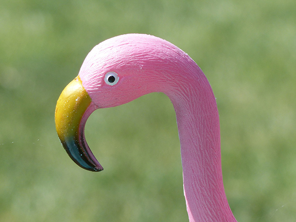 "the plastic pink flamingo essay analysis Pieces similar to ""the plastic pink flamingo: i included this piece in my portfolio as my second rhetorical analysis essay because i still refer back to the."