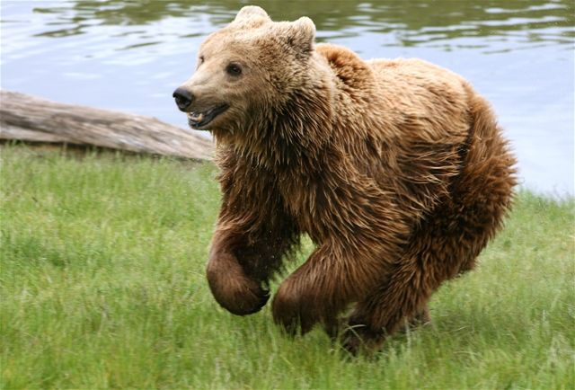 Bear in Mind? Take our Bear Trivia Quiz!