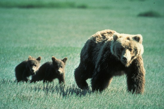 Where to View Endangered Species in North America
