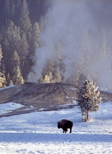 If I could send a photo to Pakistan, it would be one of a buffalo in our first national park. ©John T. Andrews