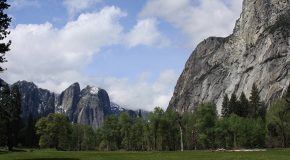 Yosemite to Cut Trees for Better Views