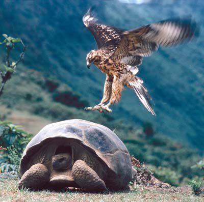 In the Galapagos, wonders never cease
