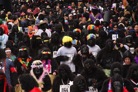 1,000 Gorillas Expected in the Streets of Denver