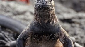 "The Galapagos Islands: An ""Opposite"" Trip"