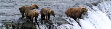 Alaska Cruise or Authentic Alaska? The Choice is Yours
