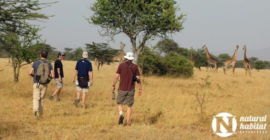 African Safari on Foot: Trekking in Kenya
