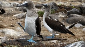 Ten Things the Galapagos Islands Taught Me