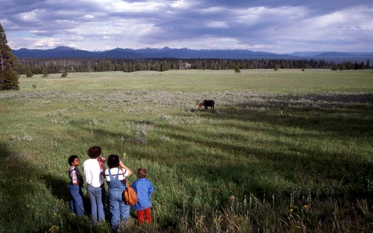 Visitors viewing moose
