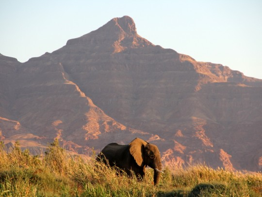 When Conservation Helps Communities, Wildlife Prospers: Lessons from Namibia
