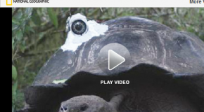 Giant Galapagos Tortoise Makes a Movie