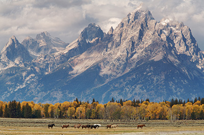 Grand Tetons and horses