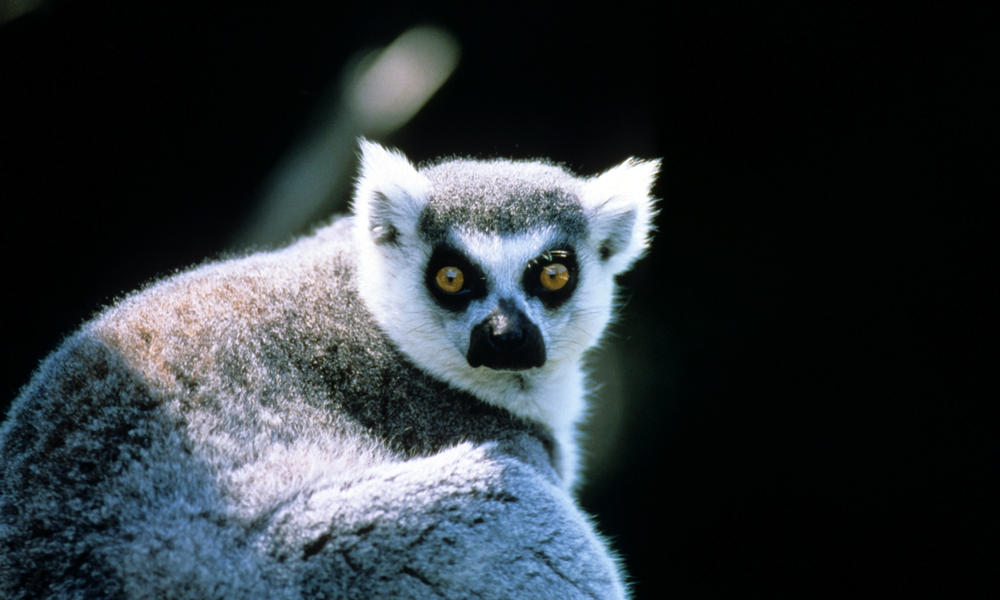 Endangered and Endemic: The Fragile Wonders of Madagascar