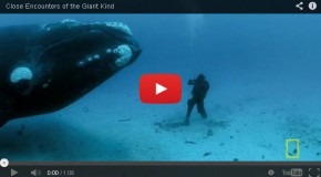 Video: The Right Whale Encounter