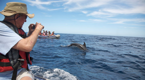 "Wild Dolphins Identify Themselves by Individual ""Names"": Will It Change How We Treat Them?"