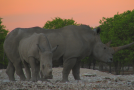 Happy World Rhino Day! Take this Quiz to Test your Rhino IQ!