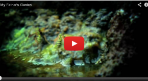 Nature on the Small Scale: Video of Life in a Garden