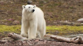 JUST ANNOUNCED: Climate Change Expert to Escort Iceland and Norway Voyage