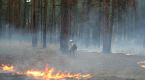 Climate Change and Wildfire Risk: Will Future Forests Be Treeless?