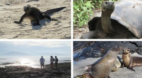 Top Four Experiences in the Galapagos