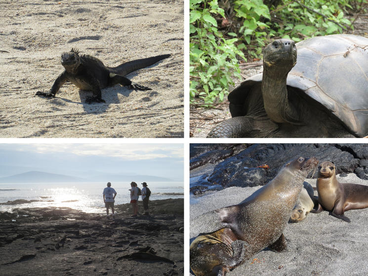 galapagos islands, turtle, iguana, seals