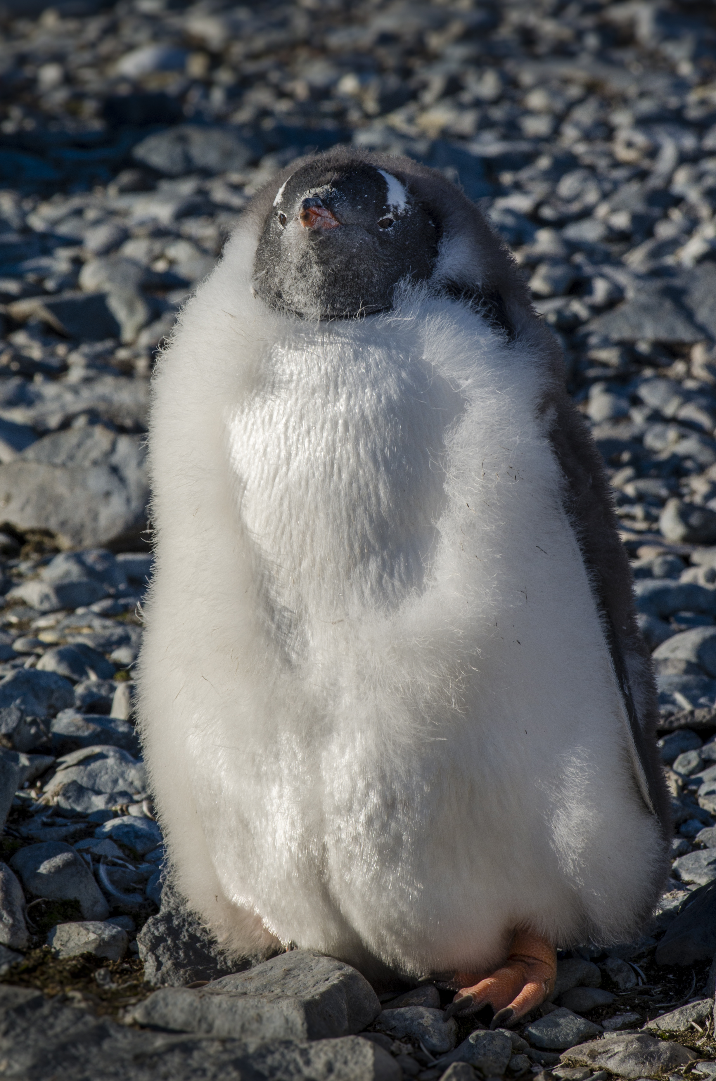 Inside Antarctica Penguins The Stars Of The Show