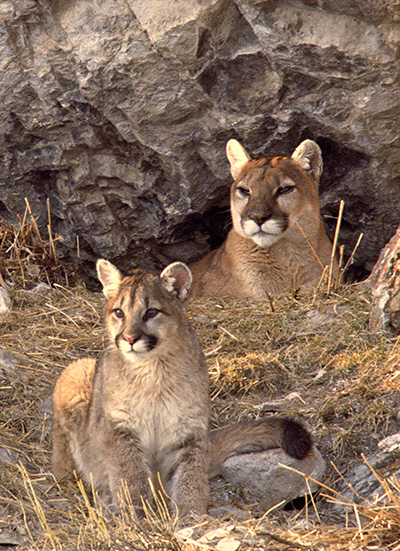 hunting should be limited because of its detrimental effects on wildlife An introduction to responsible trapping acknowledgements  consider both their beneficial and harmful effects  generally, each wildlife population reaches its lowest level just after the breeding season,.