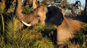 """Ten Wild Facts about the """"Big Five"""""""