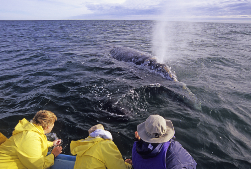 Nat Hab guests on a whale watching excursion in San Ignacio Lagoon. © Mike Bruscia