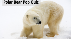 Know Before you Go: Test your Polar Bear IQ