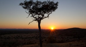 Tracking Rhinos in the Namibian Desert: A Diary