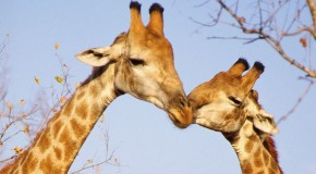 7 Photos of Animals in Love: A Tribute to Valentines Day