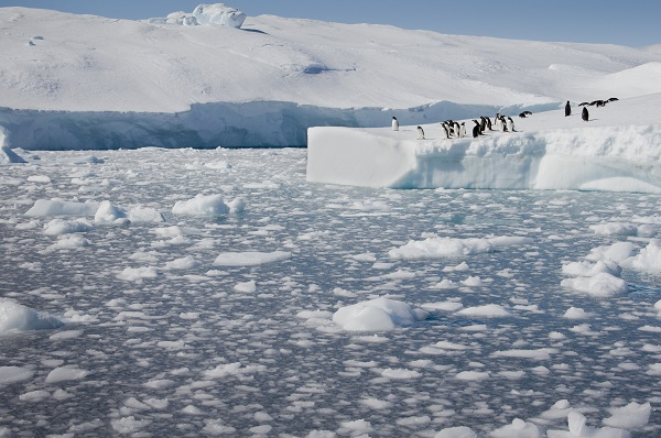 Penguins and icebergs in Antarctica