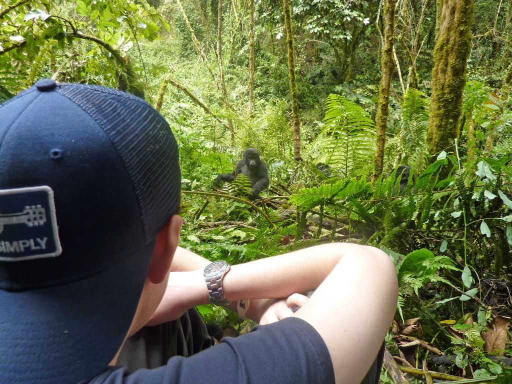 A teen viewing a gorilla in Uganda