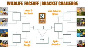 Wildlife Faceoff Bracket Challenge!