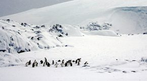 Antarctica: Discovery on the (Black-and-) White Continent