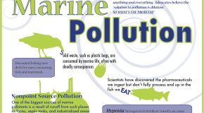Infographic: Marine Pollution and Why We Should Care