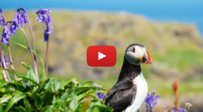 Video of the Week: Scotland's Award-winning Islands – The Outer Hebrides and More